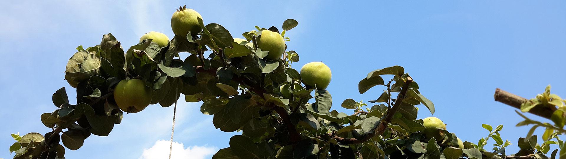 fruttuoso1